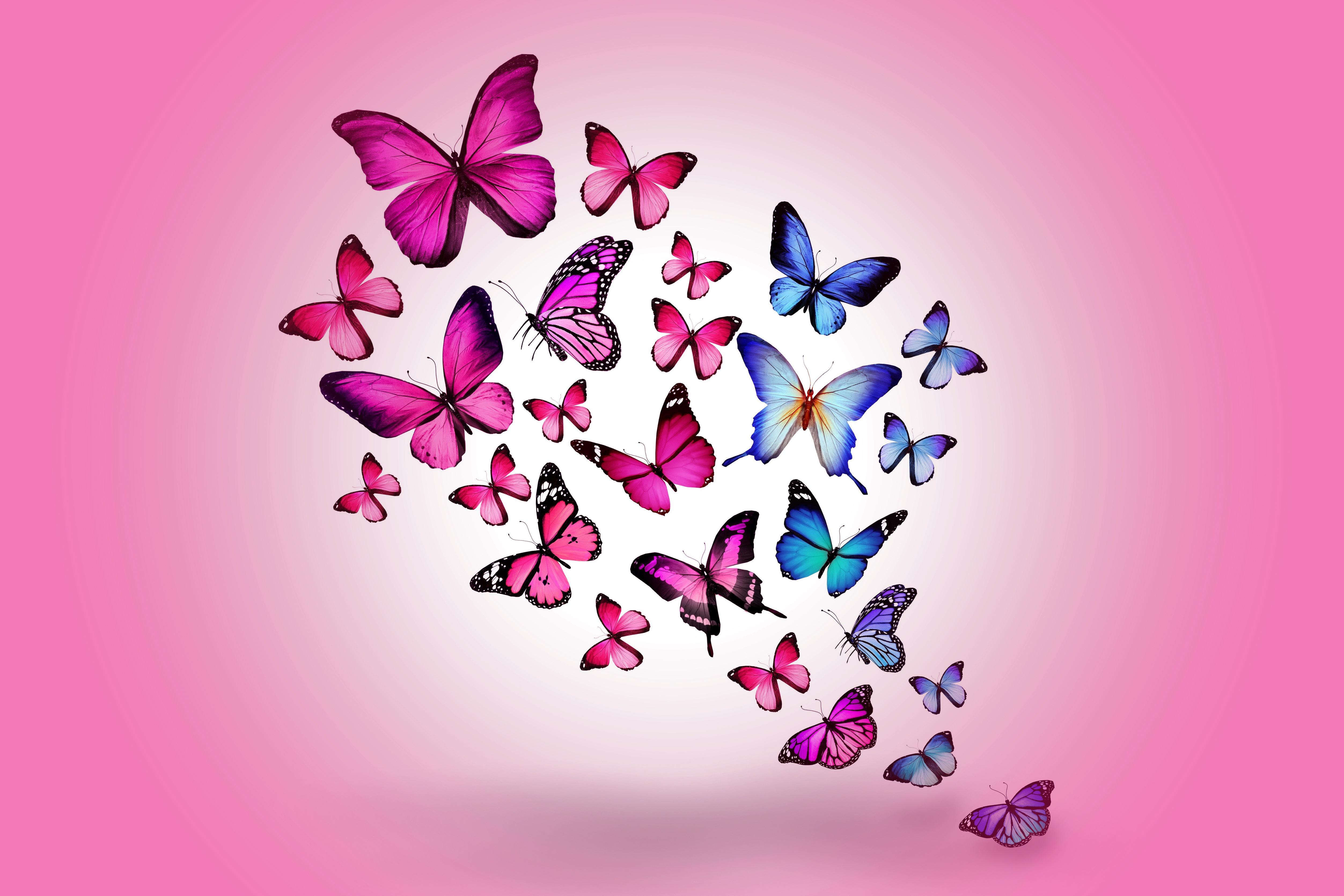 130013 скачать обои Разное, Бабочки, Рисунок, Фон, Полет, Розовый, Разноцветные - заставки и картинки бесплатно