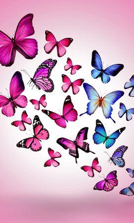 130013 descargar fondo de pantalla Miscelánea, Misceláneo, Mariposas, Imagen, Dibujo, Vuelo, Multicolor, Fondo, Rosa, Rosado: protectores de pantalla e imágenes gratis