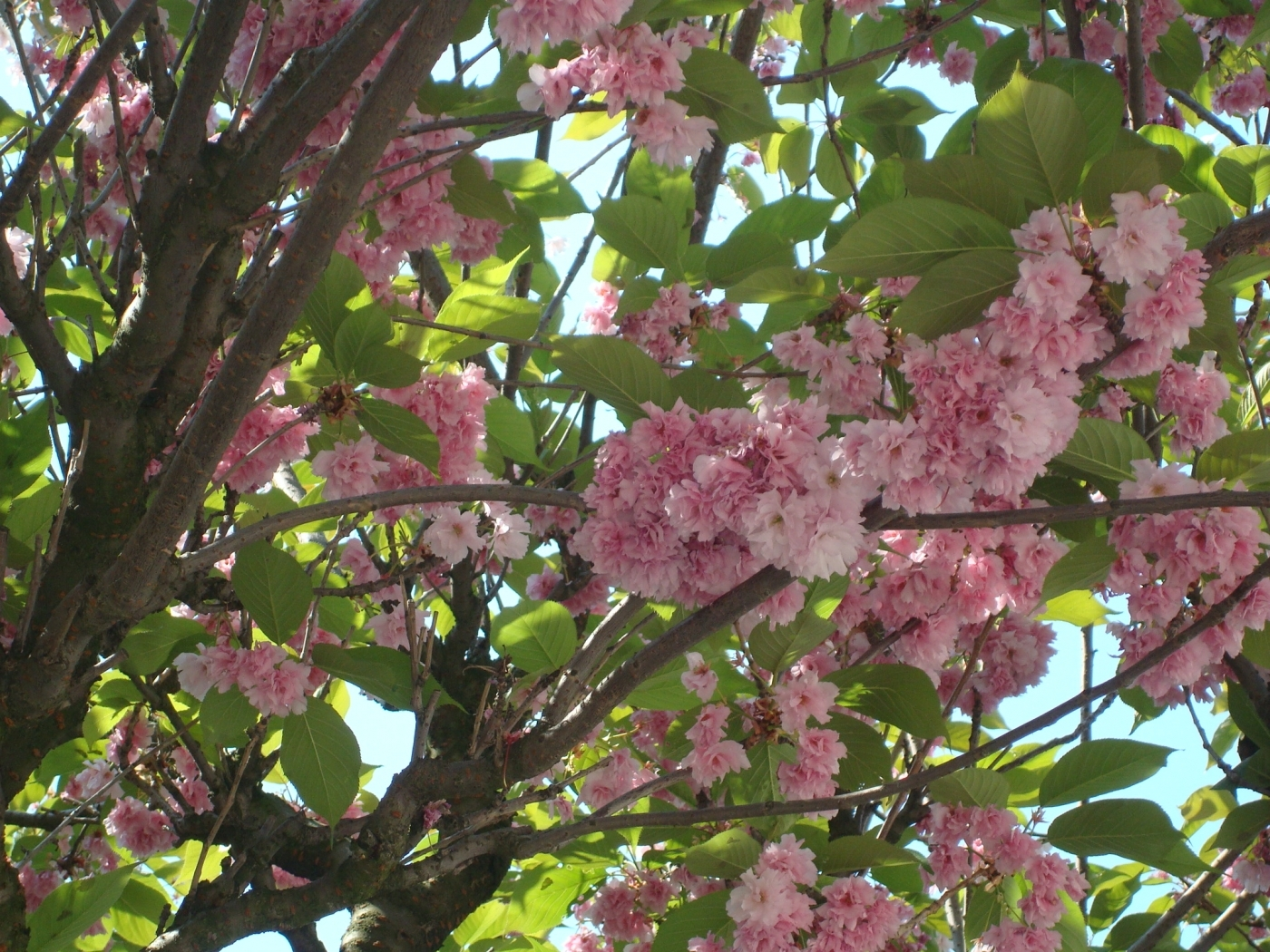 23368 descargar fondo de pantalla Plantas, Flores, Árboles: protectores de pantalla e imágenes gratis