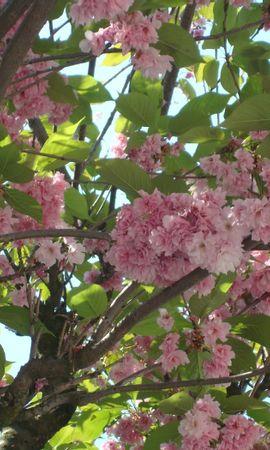 23368 télécharger le fond d'écran Plantes, Fleurs, Arbres - économiseurs d'écran et images gratuitement