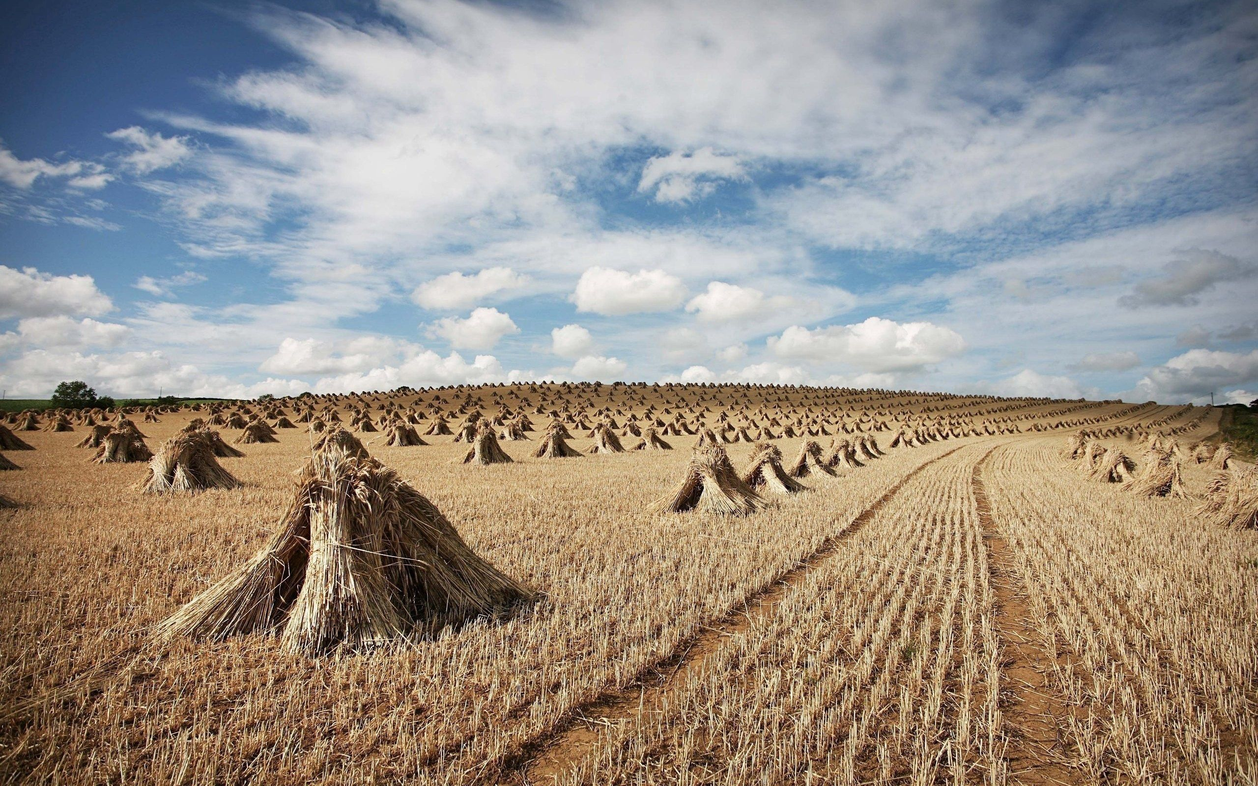 119214 Screensavers and Wallpapers Agriculture for phone. Download Nature, Field, Harvest, Hay, Agriculture, Sheaves, Cleaning pictures for free