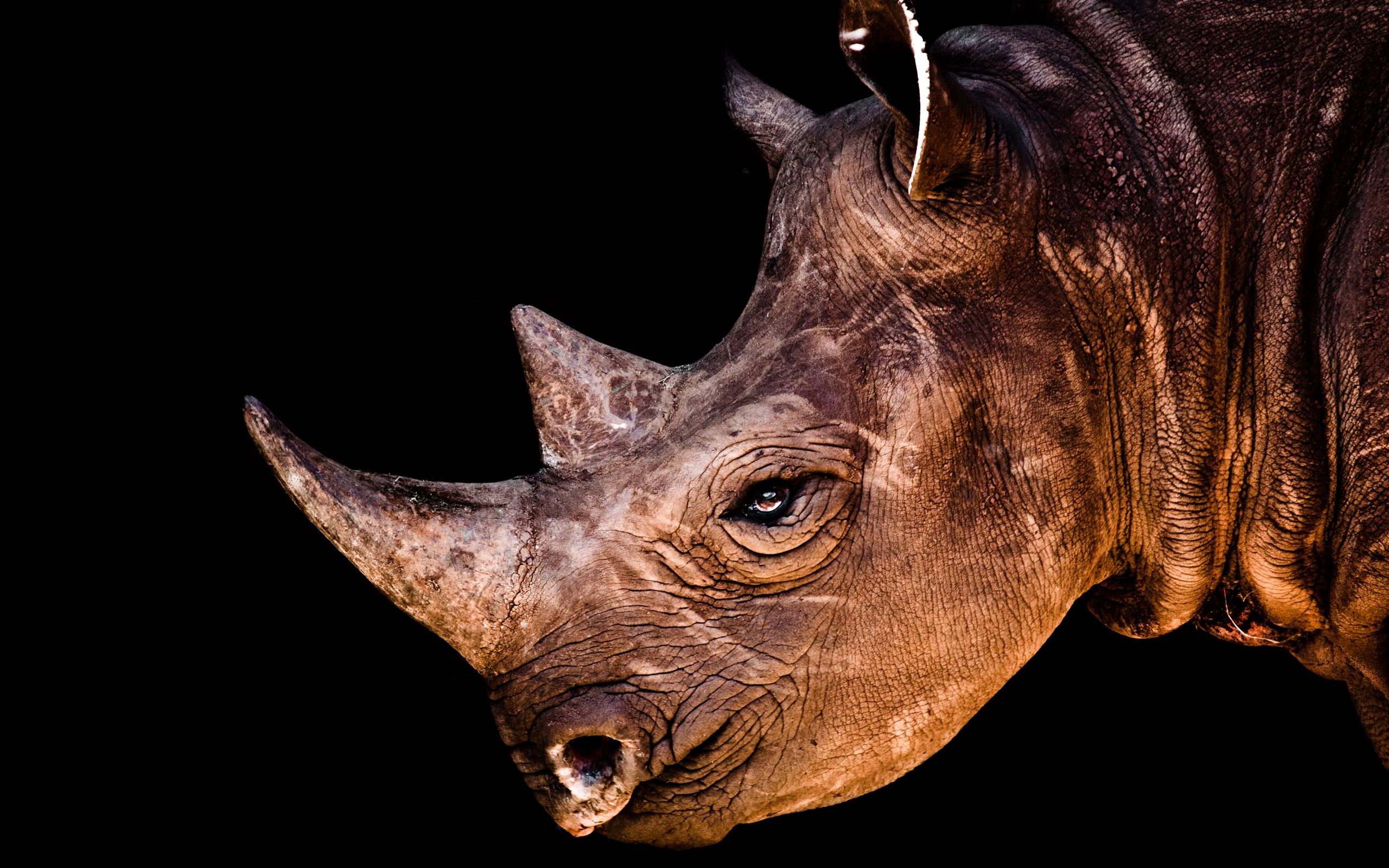 155062 скачать обои Животные, Носорог, Голова, Тень, Профиль - заставки и картинки бесплатно