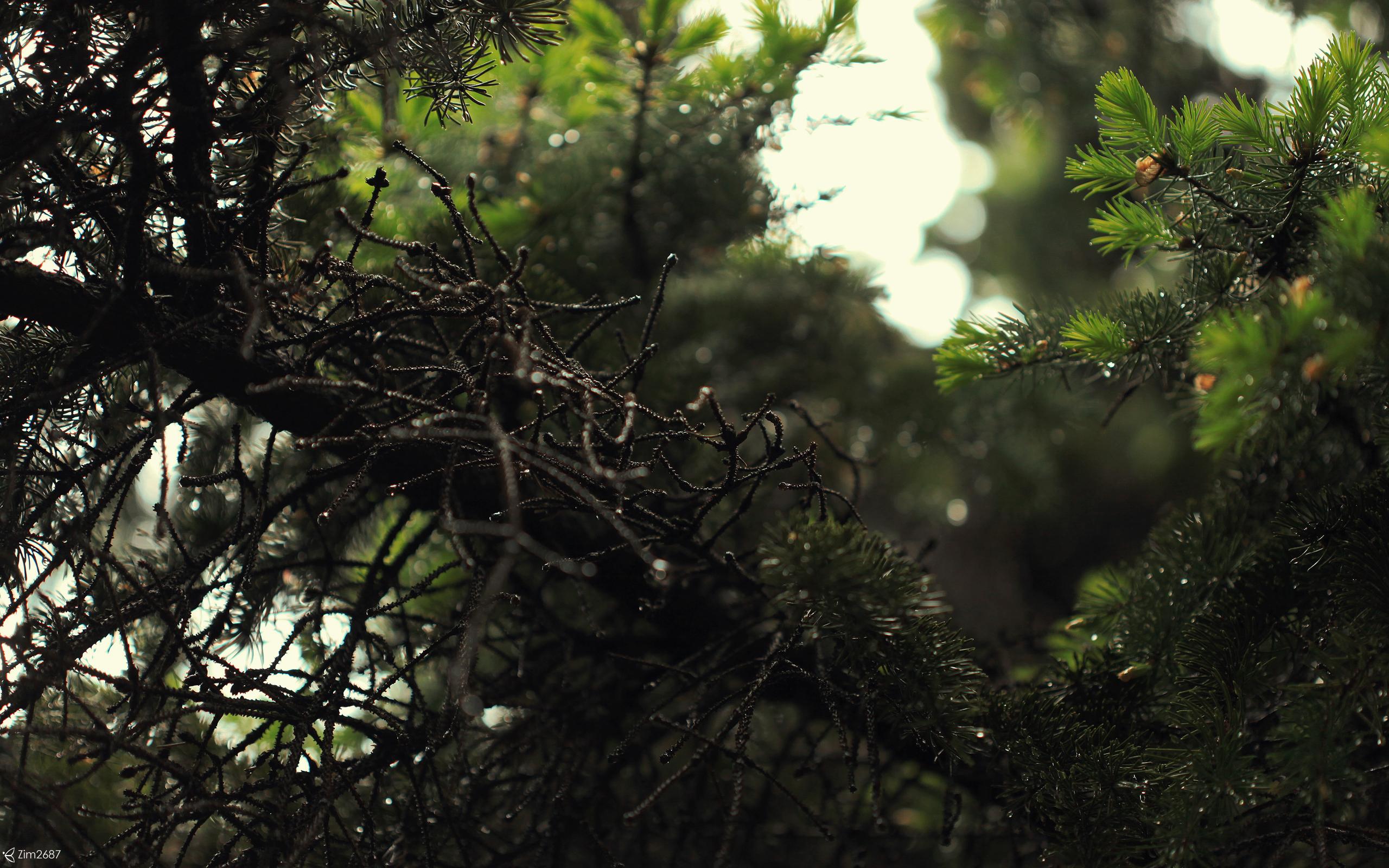 18971 скачать обои Растения, Деревья - заставки и картинки бесплатно