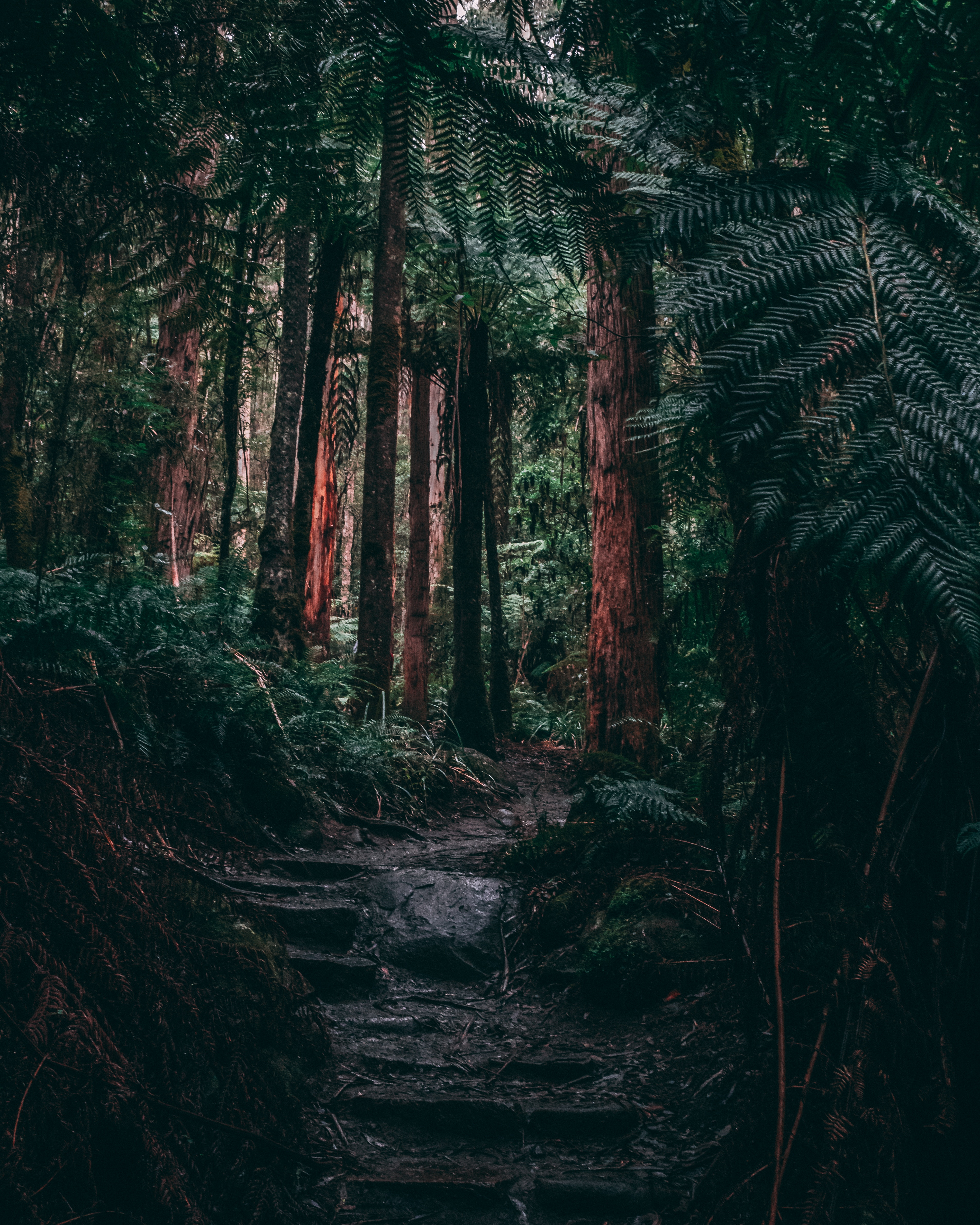 72863 download wallpaper Nature, Trees, Fern, Forest, Path, Tropics, Jungle screensavers and pictures for free