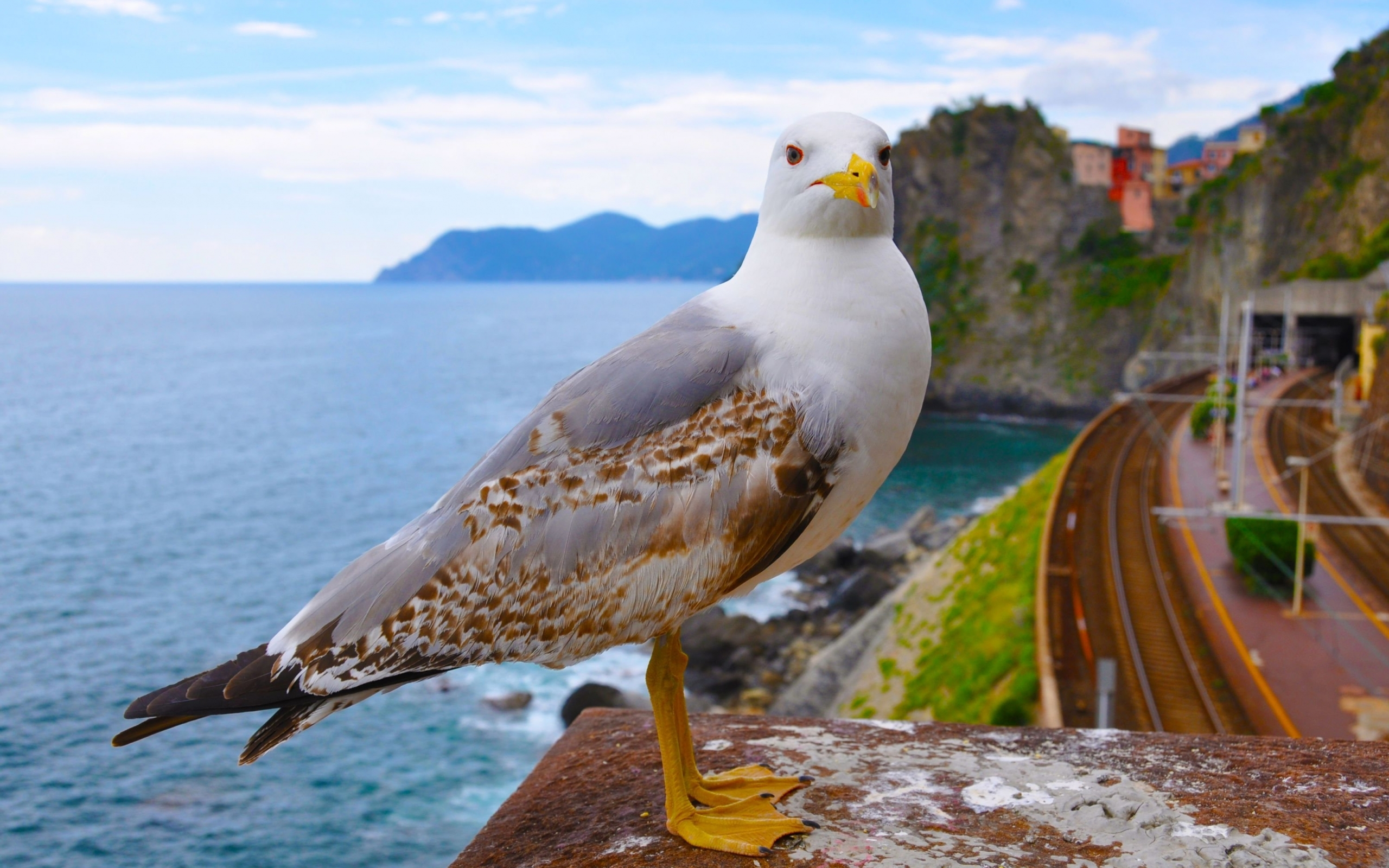 24665 download wallpaper Animals, Birds, Seagulls screensavers and pictures for free