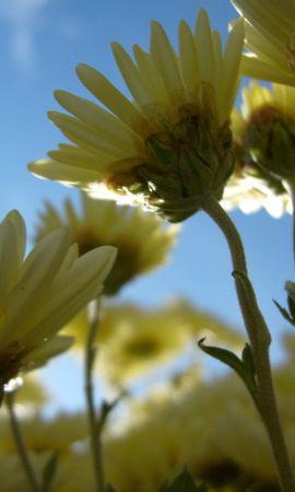 5644 скачать обои Растения, Цветы - заставки и картинки бесплатно