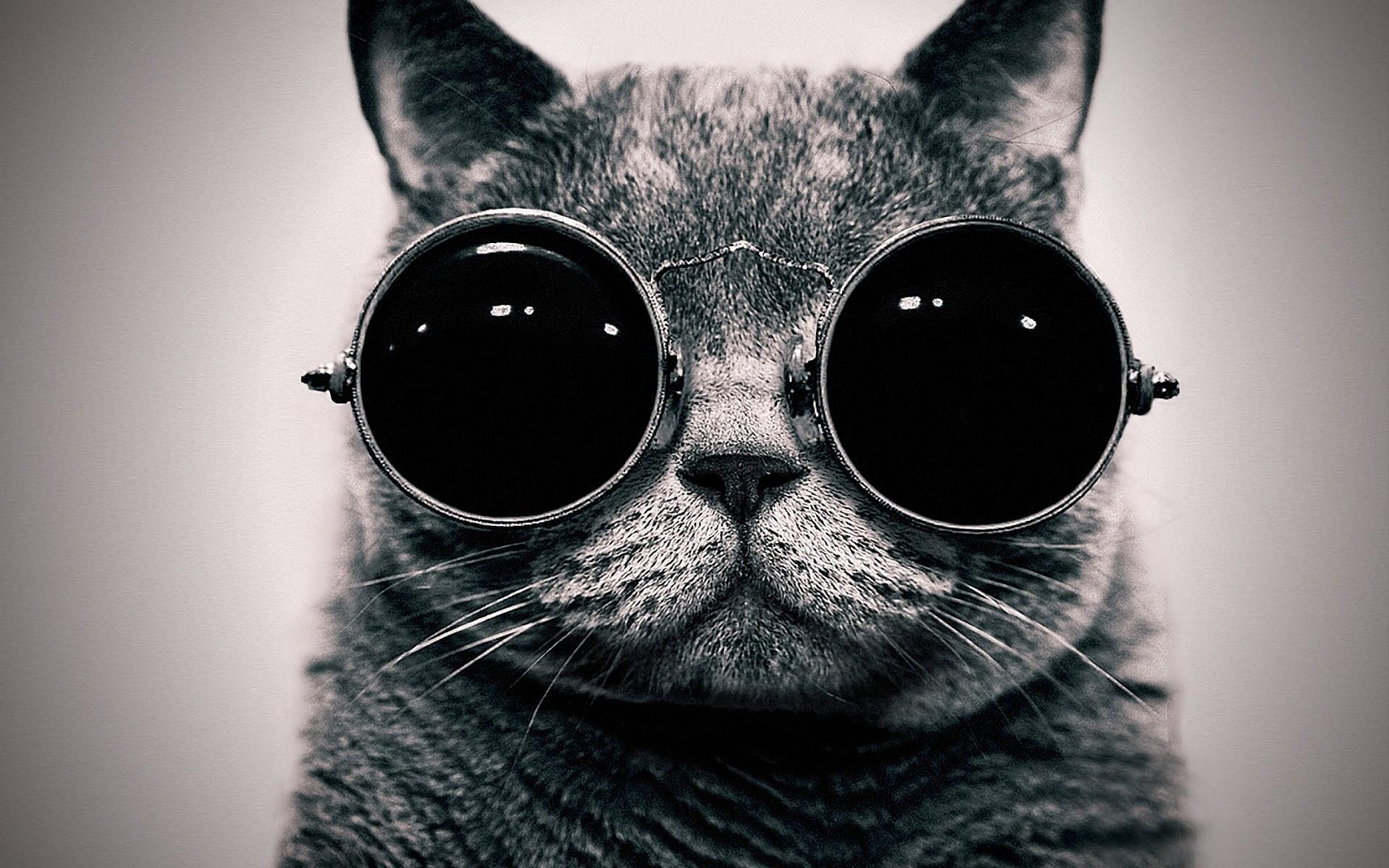 49948 скачать обои Животные, Кошки (Коты, Котики) - заставки и картинки бесплатно