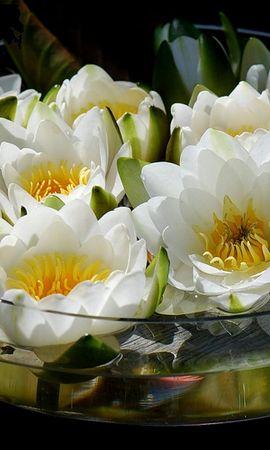 49279 скачать обои Растения, Цветы - заставки и картинки бесплатно