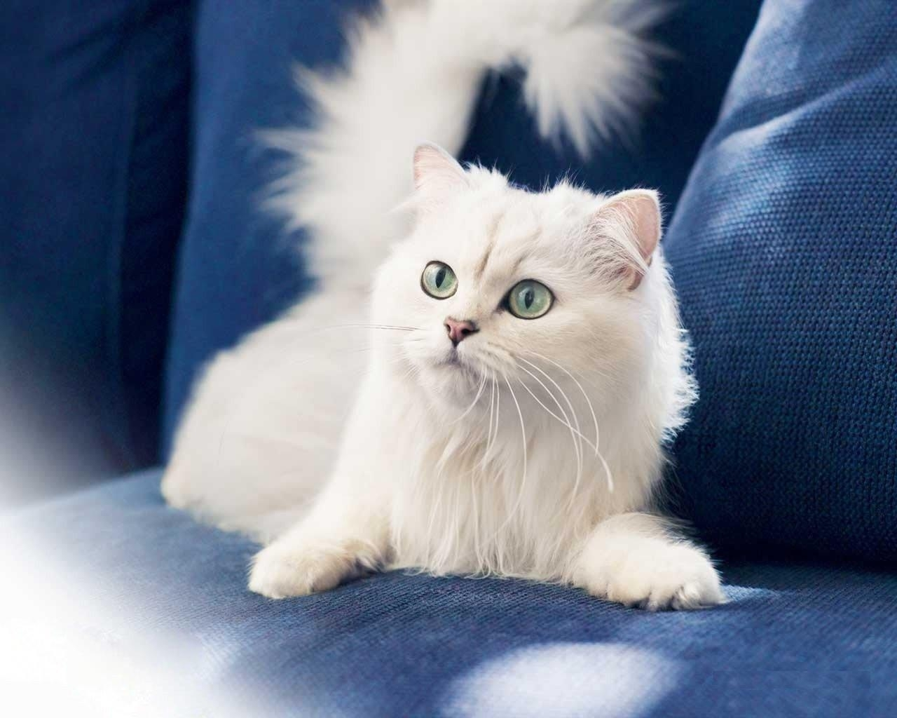 1861 download wallpaper Animals, Cats screensavers and pictures for free