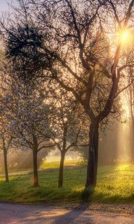 22054 скачать обои Пейзаж, Деревья, Трава, Солнце - заставки и картинки бесплатно