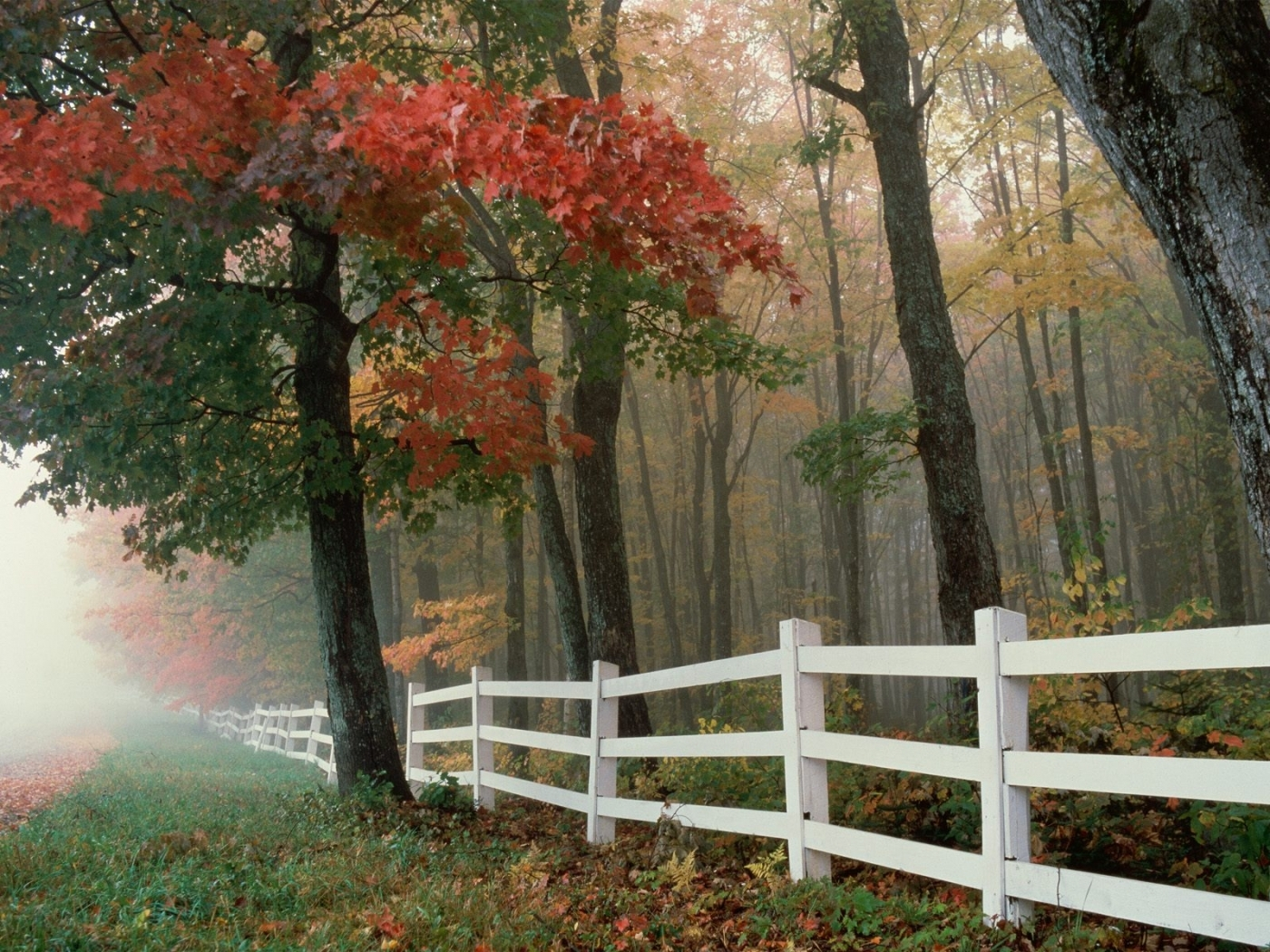 27681 download wallpaper Landscape, Trees, Autumn, Leaves screensavers and pictures for free