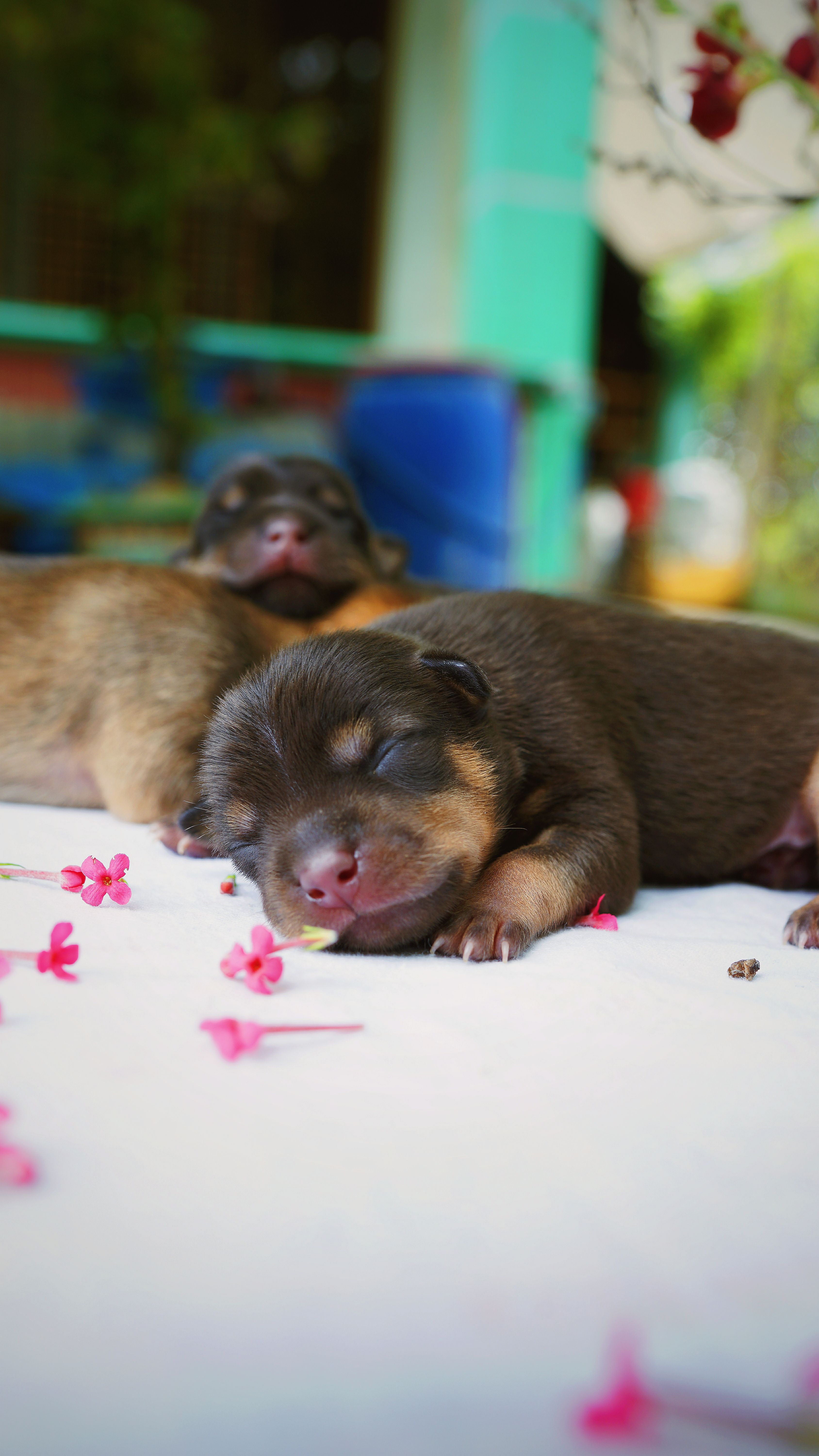 114744 download wallpaper Animals, Puppy, Dog, Sleeping, Asleep, Nice, Sweetheart screensavers and pictures for free