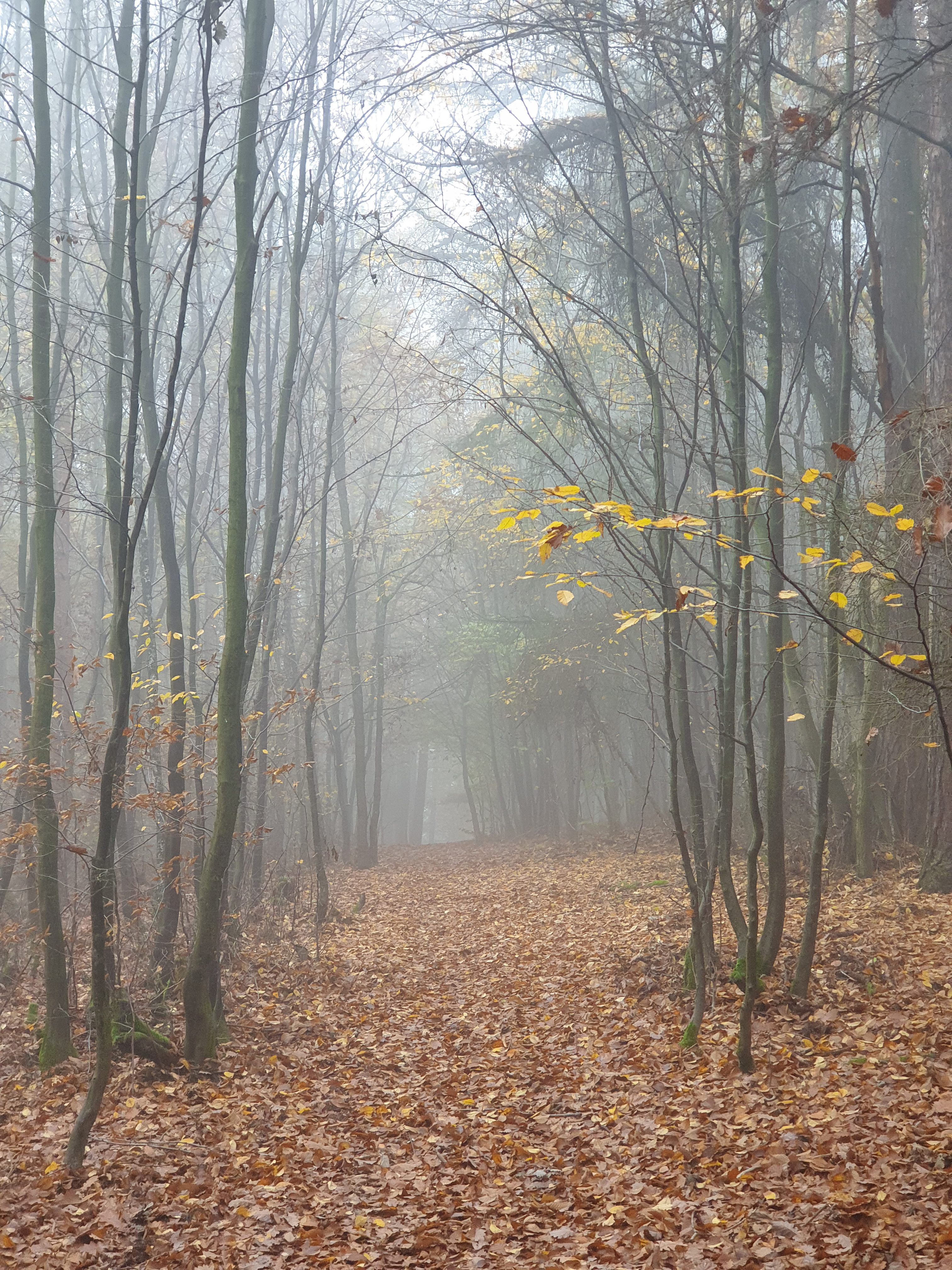 113468 download wallpaper Nature, Forest, Fog, Trees, Autumn screensavers and pictures for free