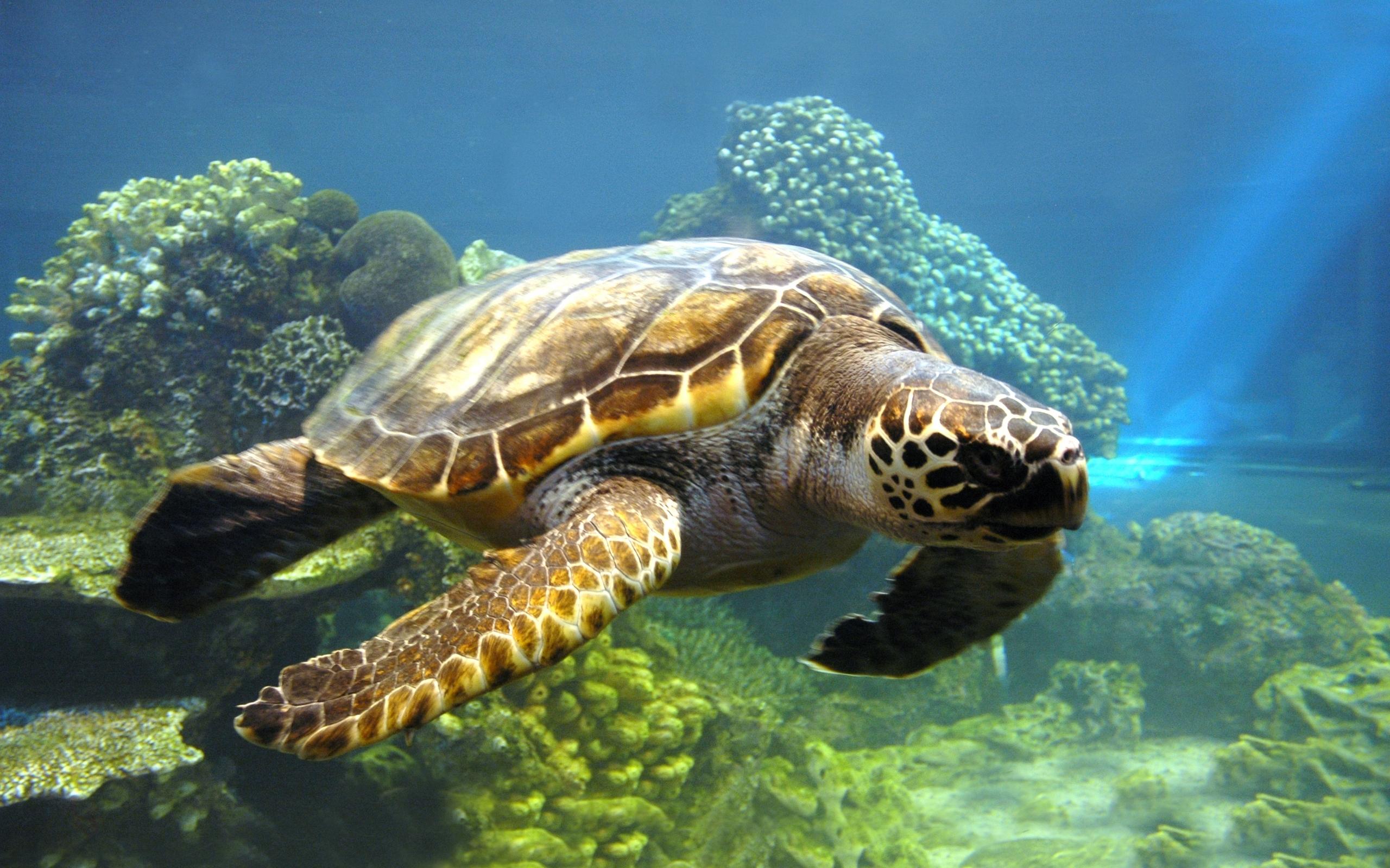 25705 скачать обои Животные, Черепахи, Море - заставки и картинки бесплатно
