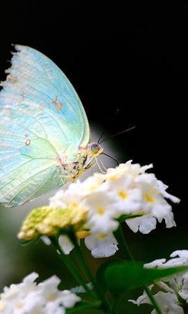 35193 Salvapantallas y fondos de pantalla Insectos en tu teléfono. Descarga imágenes de Mariposas, Insectos gratis