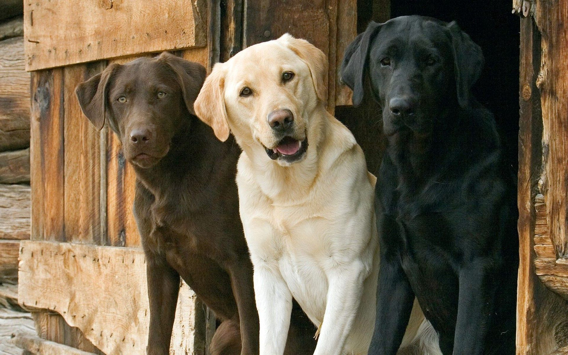 143091 download wallpaper Animals, Dogs, Three, Ears, Expectation, Waiting, Beautiful screensavers and pictures for free