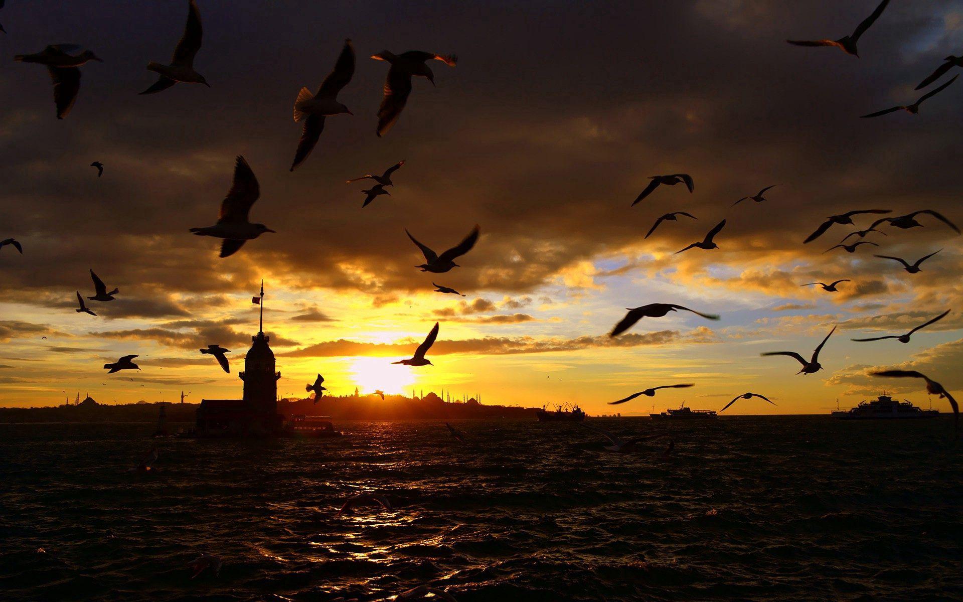 134943 Hintergrundbild herunterladen Vögel, Sea, Übernachtung, Dunkel, Flug - Bildschirmschoner und Bilder kostenlos