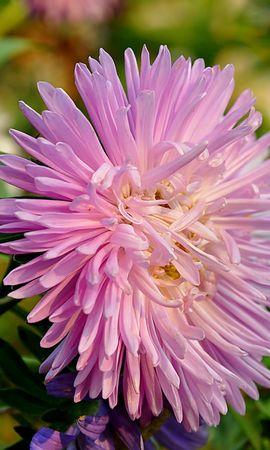 41002 télécharger le fond d'écran Plantes, Fleurs - économiseurs d'écran et images gratuitement