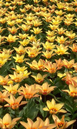 10785 скачать обои Растения, Цветы, Фон - заставки и картинки бесплатно