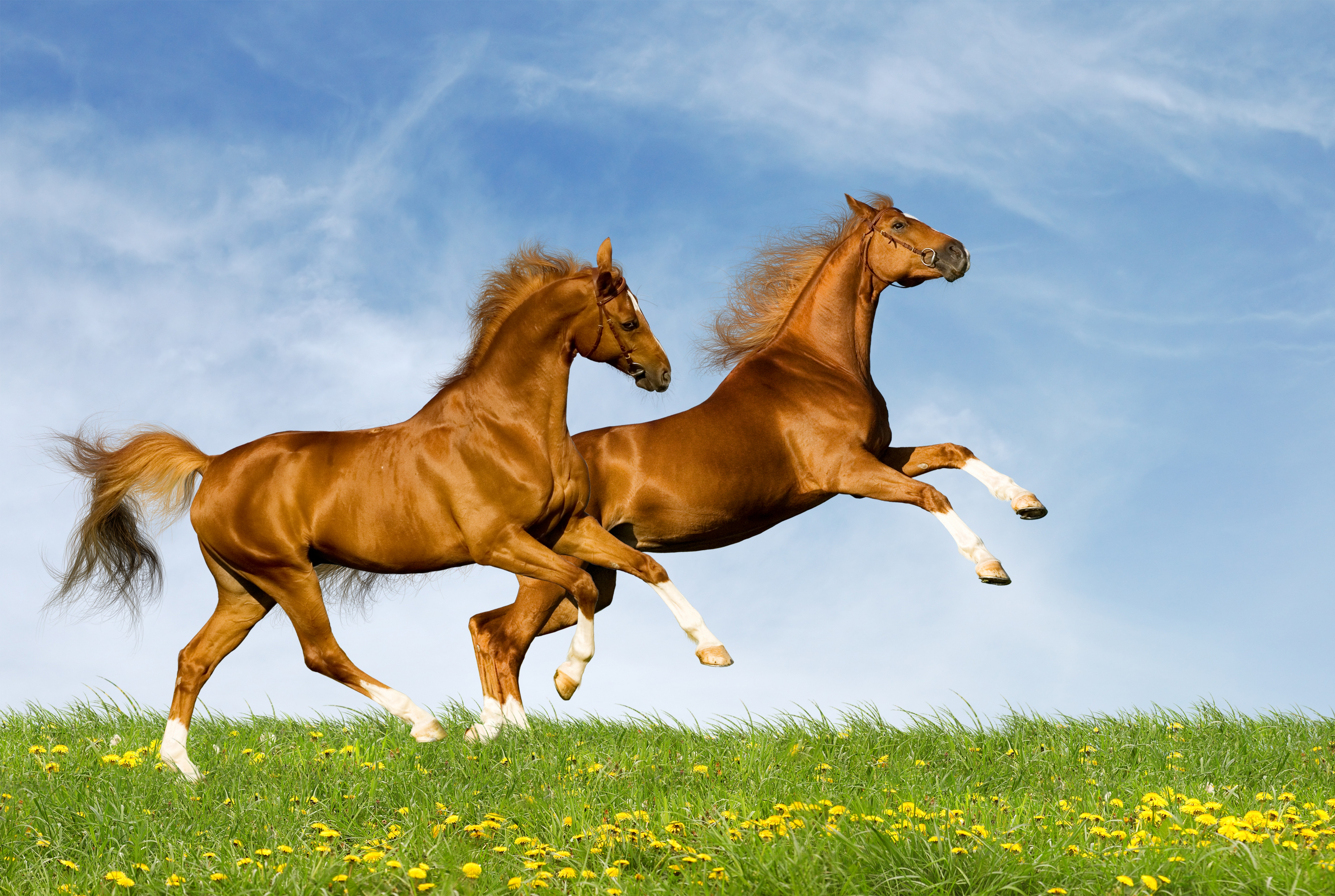 134463 Заставки и Обои Лошади на телефон. Скачать Лошади, Животные, Природа, Лето, Пара, Прыжок картинки бесплатно