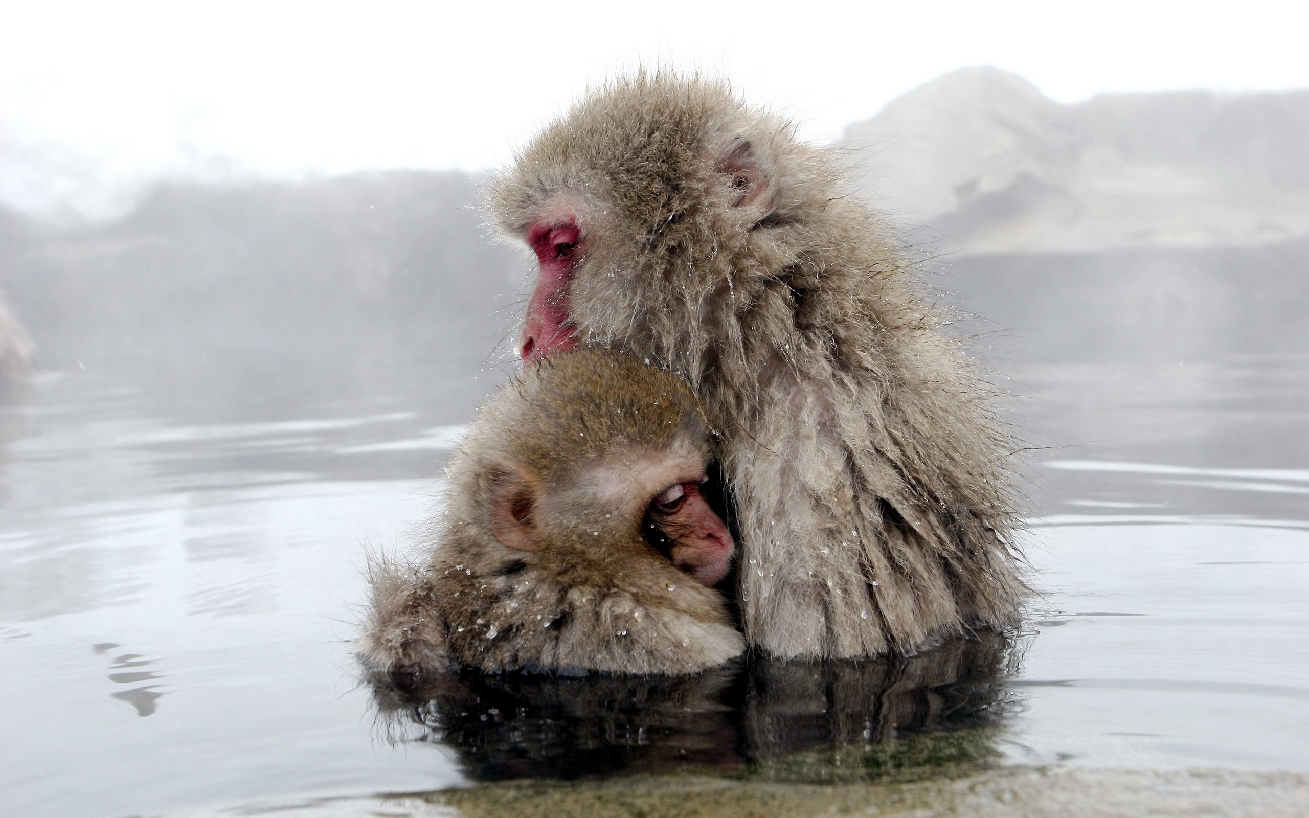 42334 Screensavers and Wallpapers Monkeys for phone. Download Animals, Monkeys pictures for free