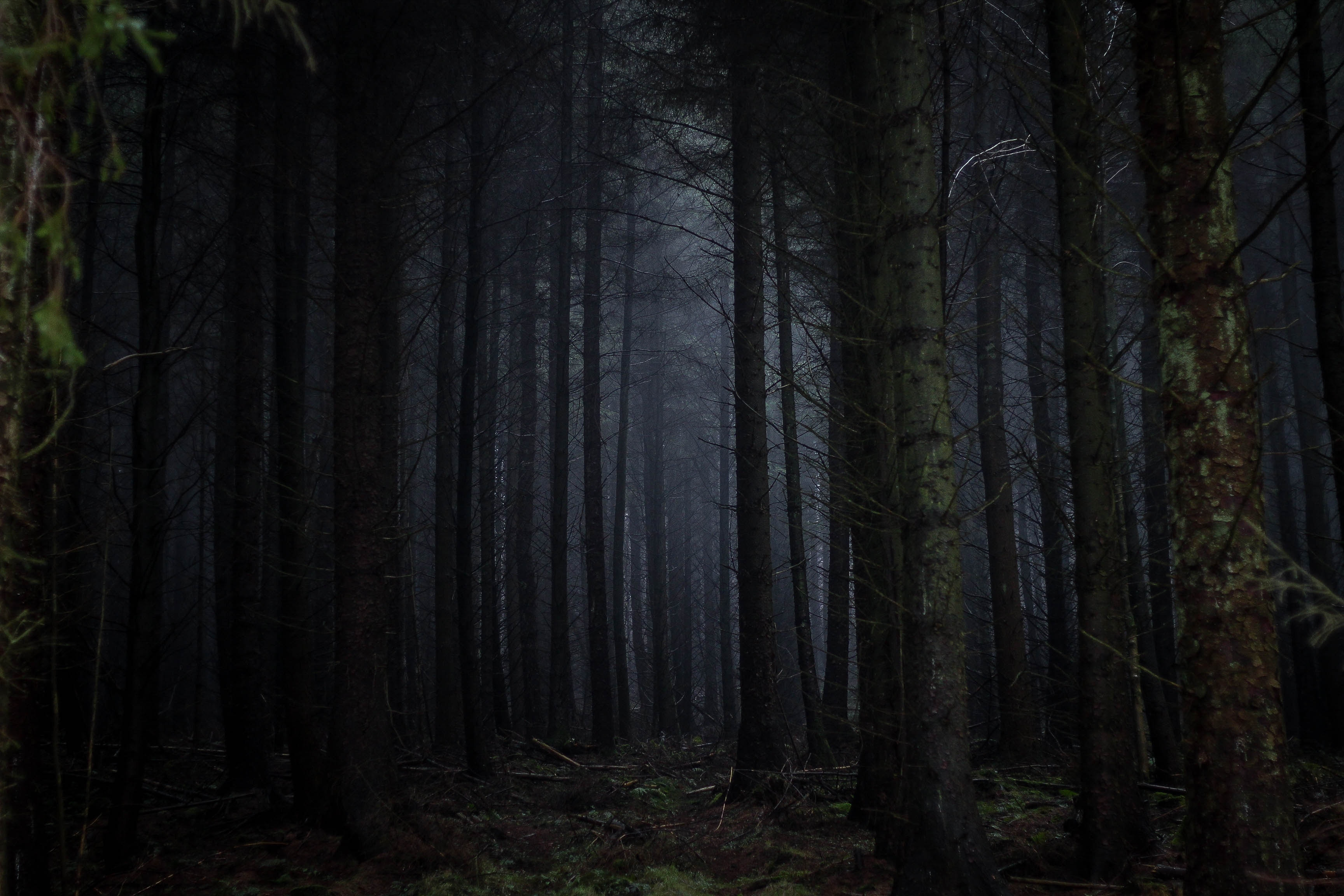84635 скачать обои Темные, Темный, Лес, Деревья, Туман, Мрачный - заставки и картинки бесплатно