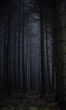 84635 Заставки и Обои Темные на телефон. Скачать Темные, Лес, Туман, Темный, Деревья, Мрачный картинки бесплатно