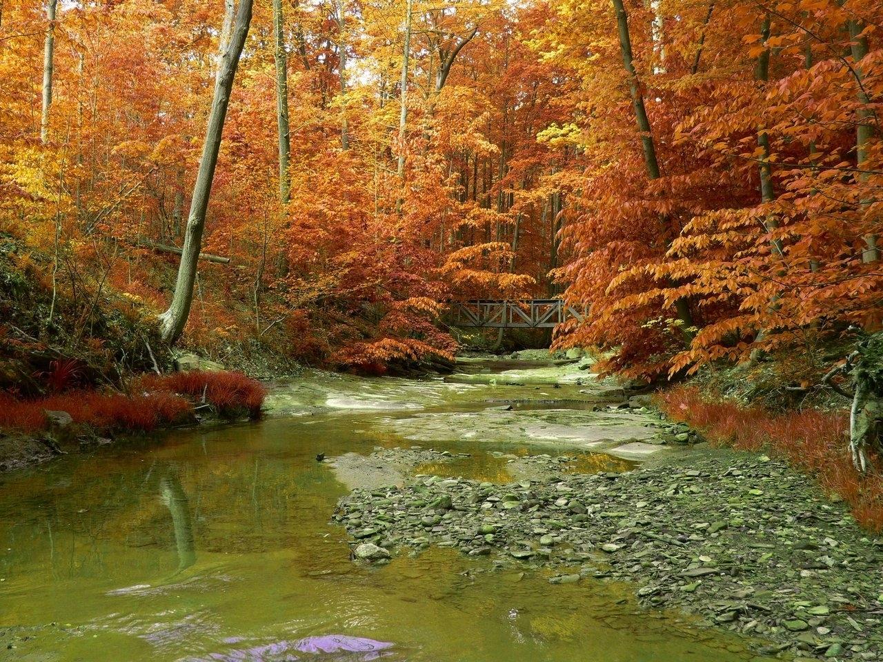 3233 скачать обои Пейзаж, Река, Деревья, Осень - заставки и картинки бесплатно