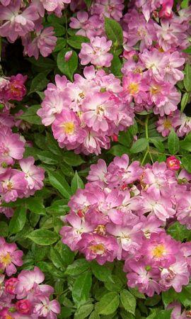 5692 скачать обои Растения, Цветы, Фон - заставки и картинки бесплатно