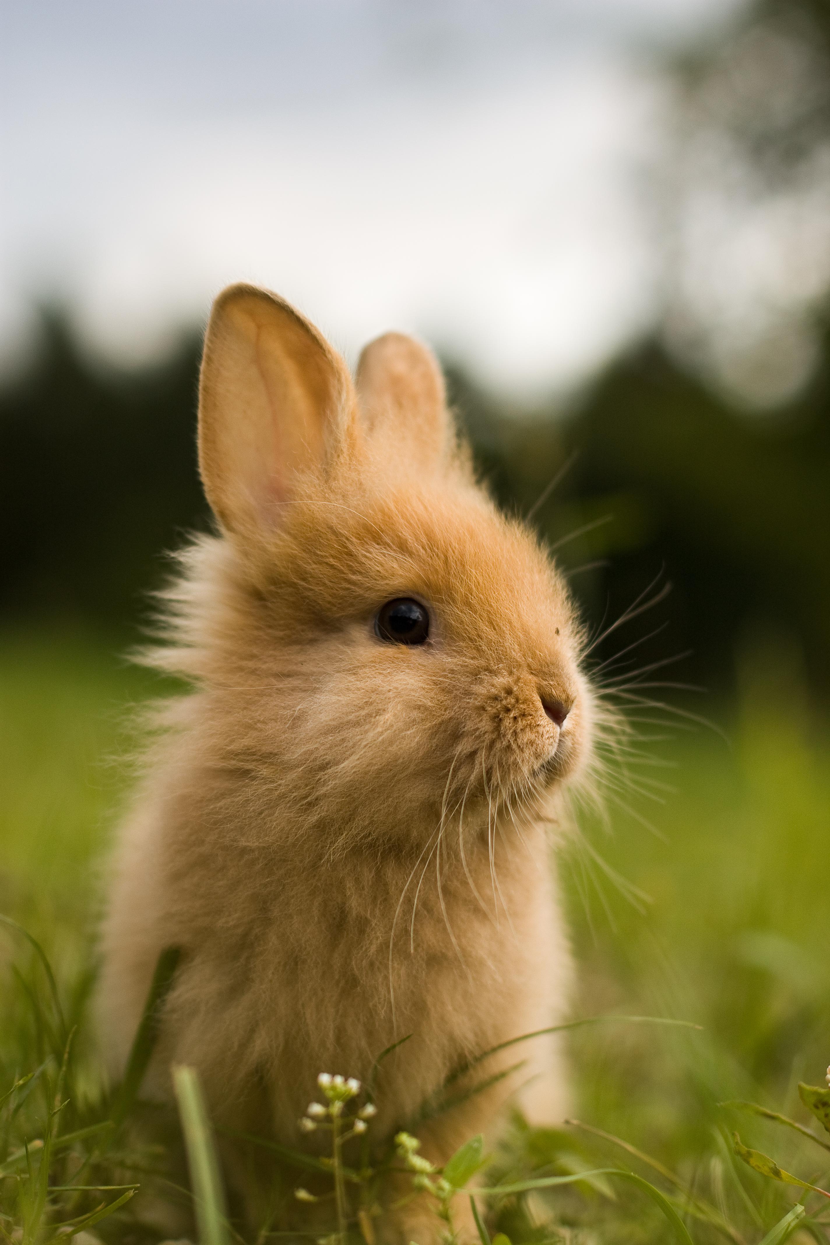 151965 скачать обои Животные, Зелень, Детеныш, Пушистый, Животное, Кролик - заставки и картинки бесплатно