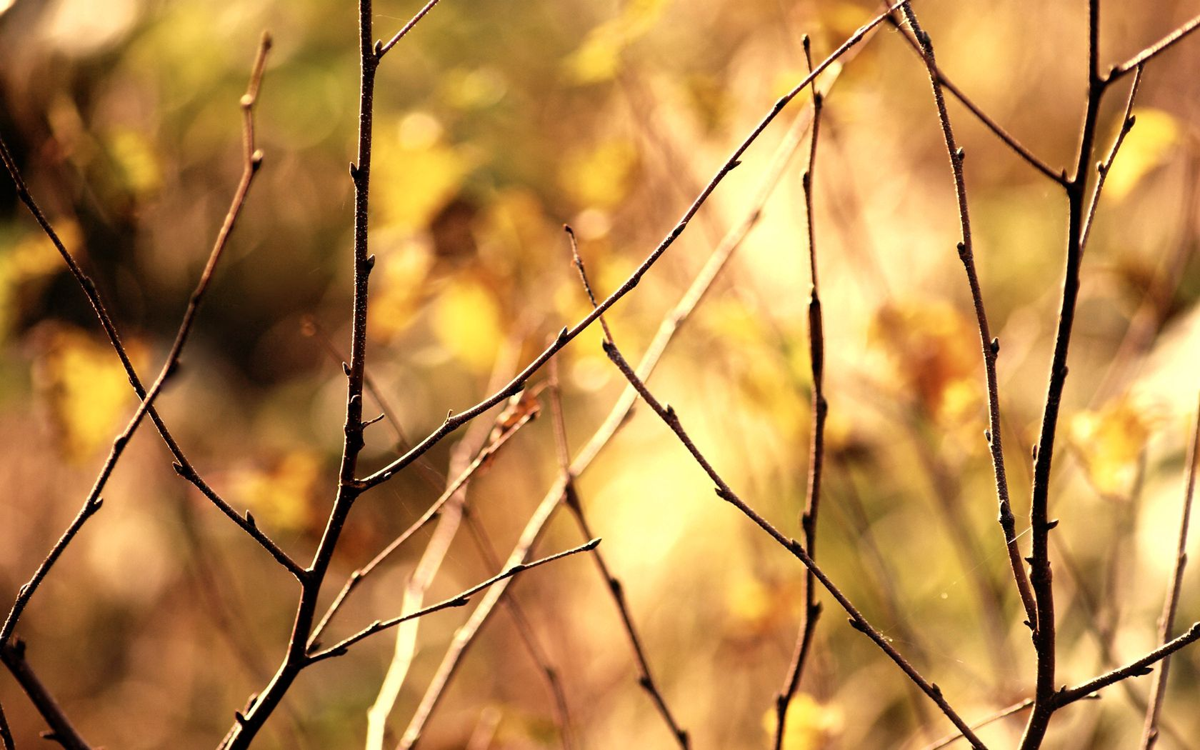 118692 download wallpaper Macro, Branch, Autumn, Background screensavers and pictures for free