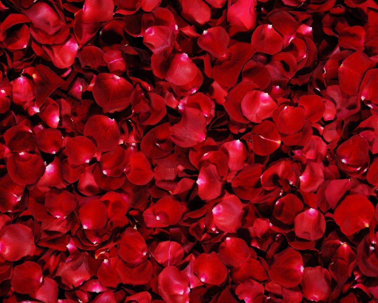 18973 скачать обои Растения, Цветы, Фон, Розы - заставки и картинки бесплатно