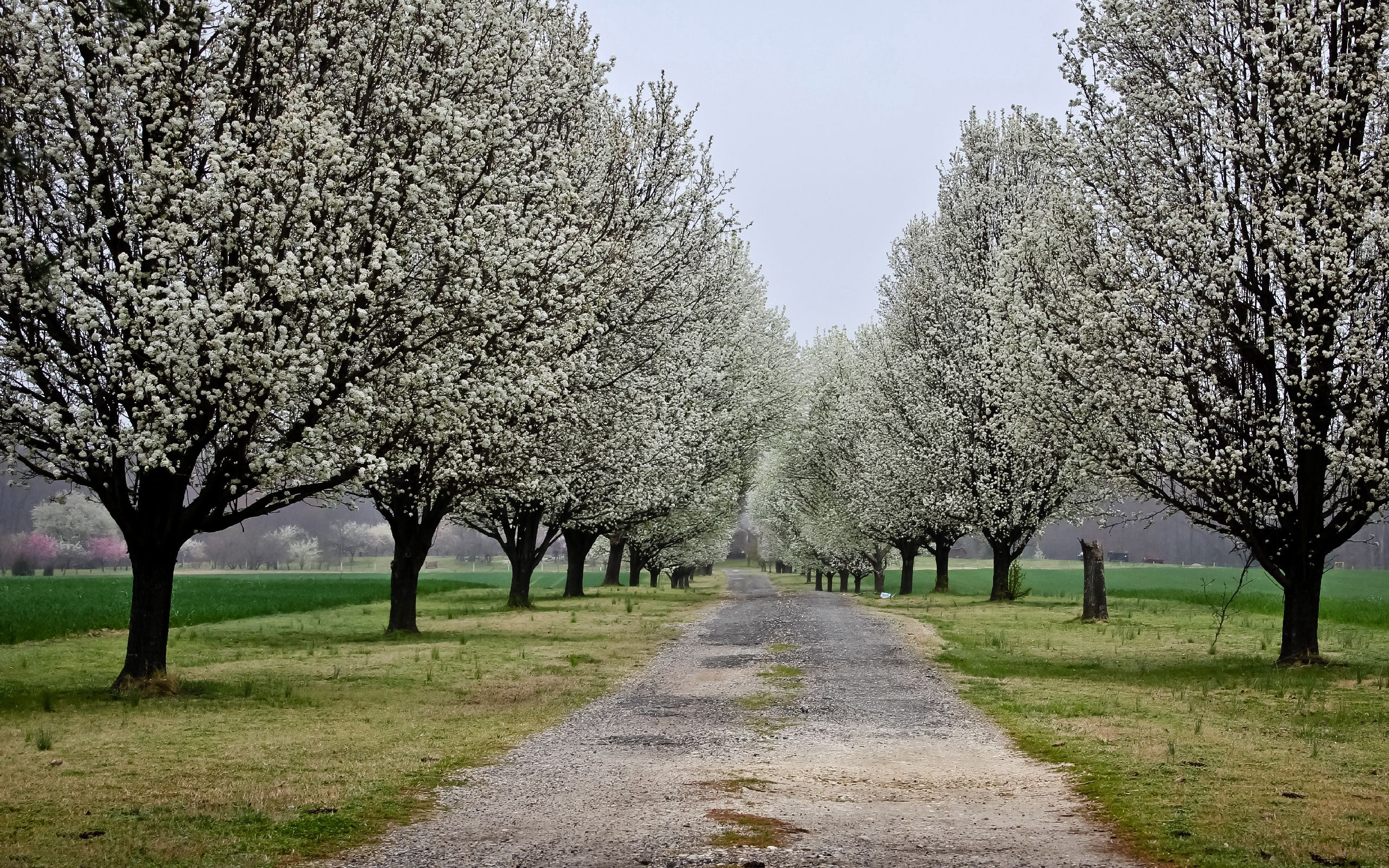 88659 download wallpaper Nature, Flowers, Trees, Road, Park screensavers and pictures for free