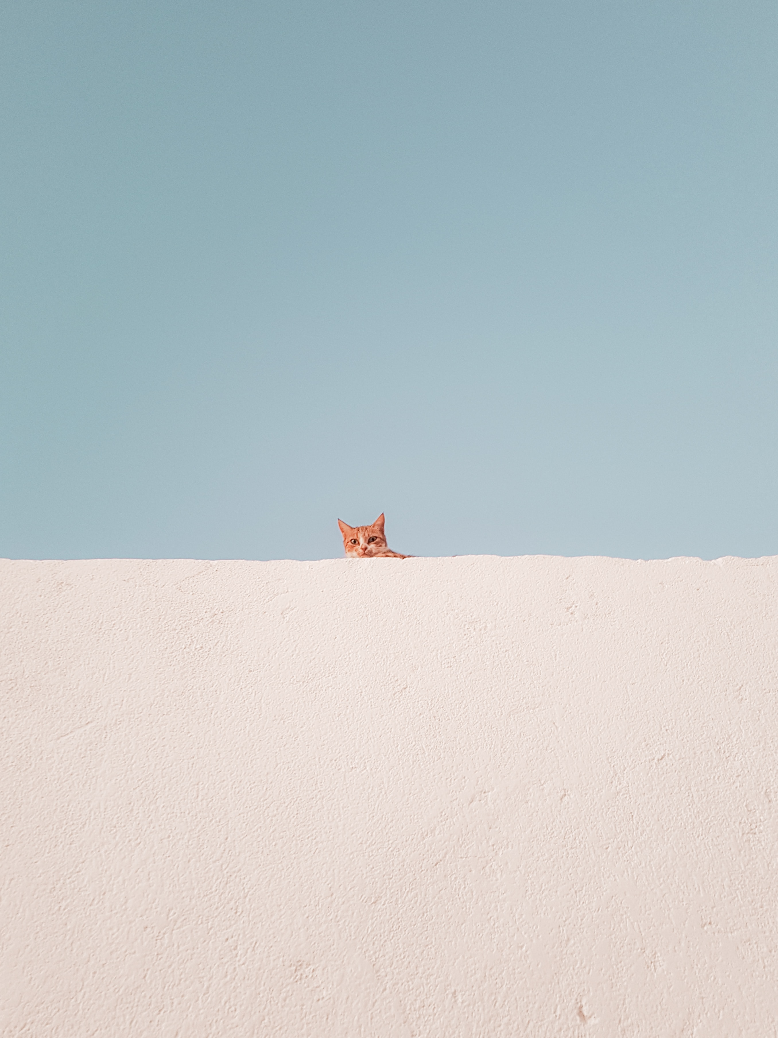 Download mobile wallpaper Peek Out, Look Out, Cat, Minimalism, Wall, Funny for free.