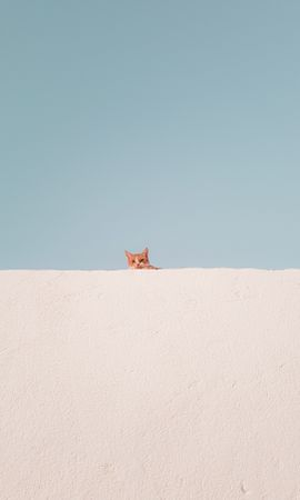 122303 download wallpaper Minimalism, Cat, Wall, Peek Out, Look Out, Funny screensavers and pictures for free