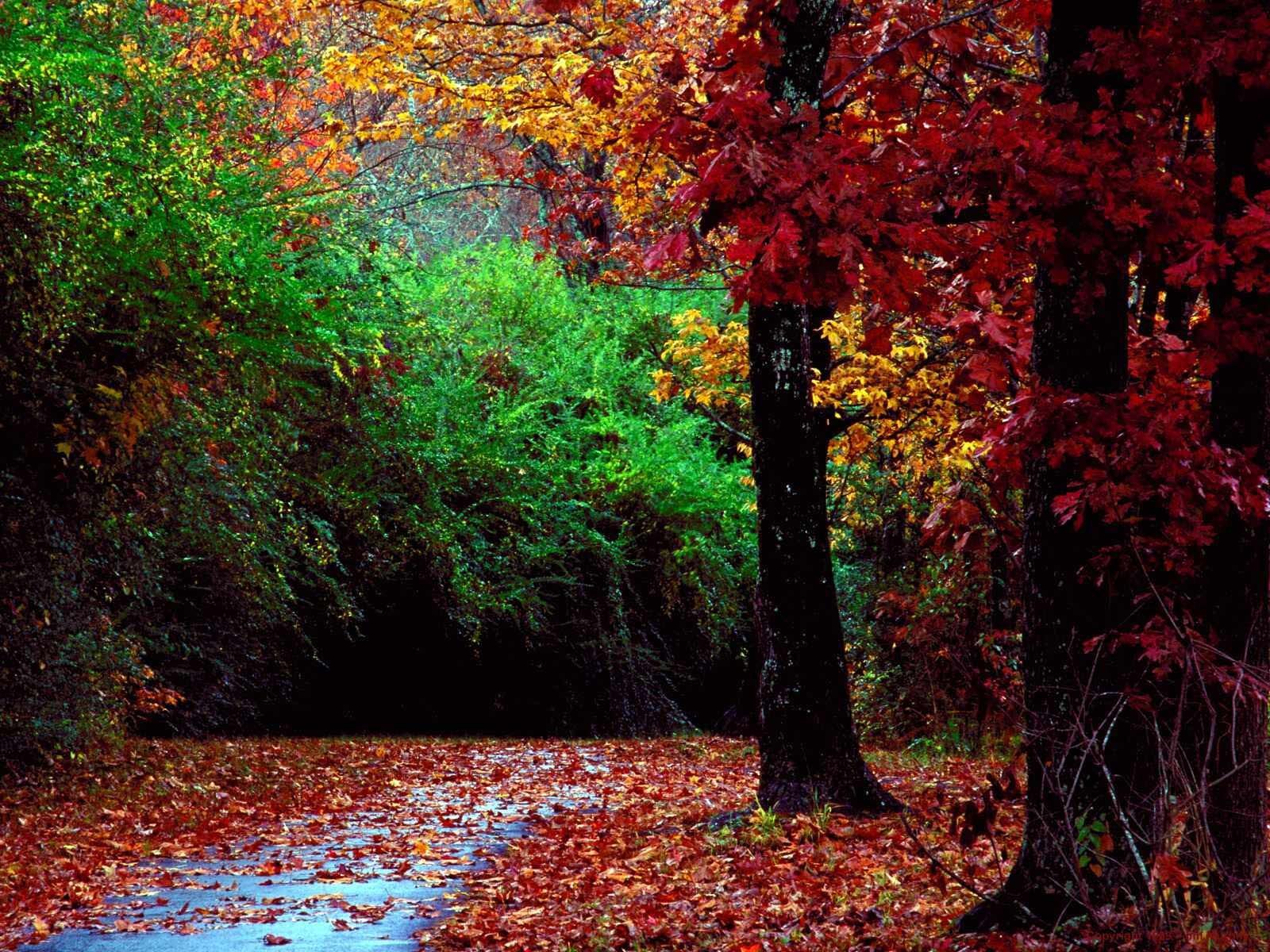 11271 скачать обои Пейзаж, Деревья, Осень, Листья - заставки и картинки бесплатно