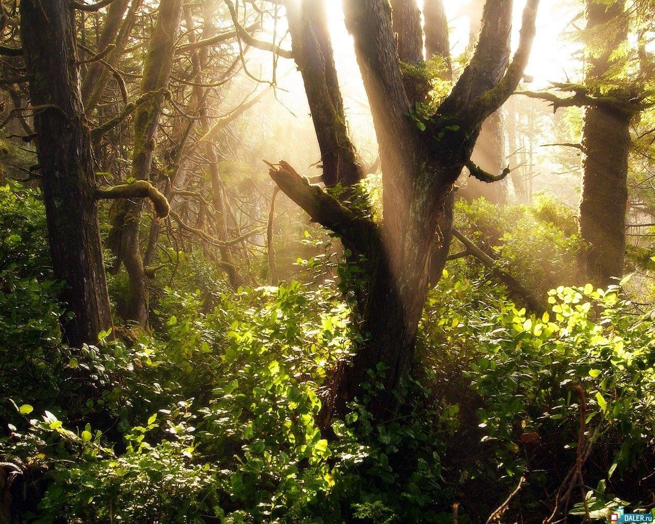 343 descargar fondo de pantalla Plantas, Paisaje, Naturaleza, Árboles: protectores de pantalla e imágenes gratis