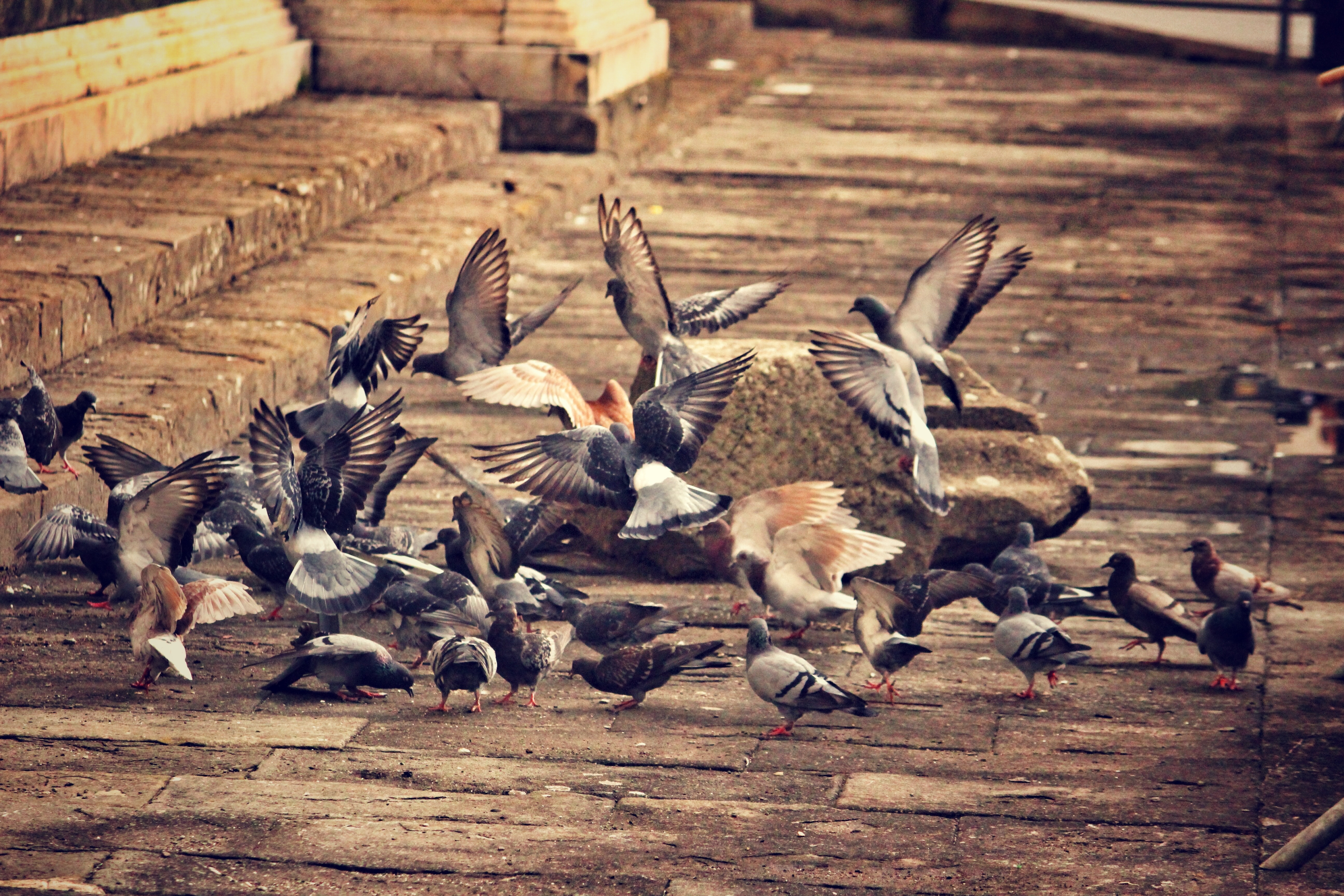 97438 Screensavers and Wallpapers Birds for phone. Download Animals, Pigeons, Flock Of Birds, City, Birds pictures for free