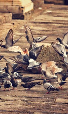 97438 download wallpaper Animals, Pigeons, Flock Of Birds, City, Birds screensavers and pictures for free
