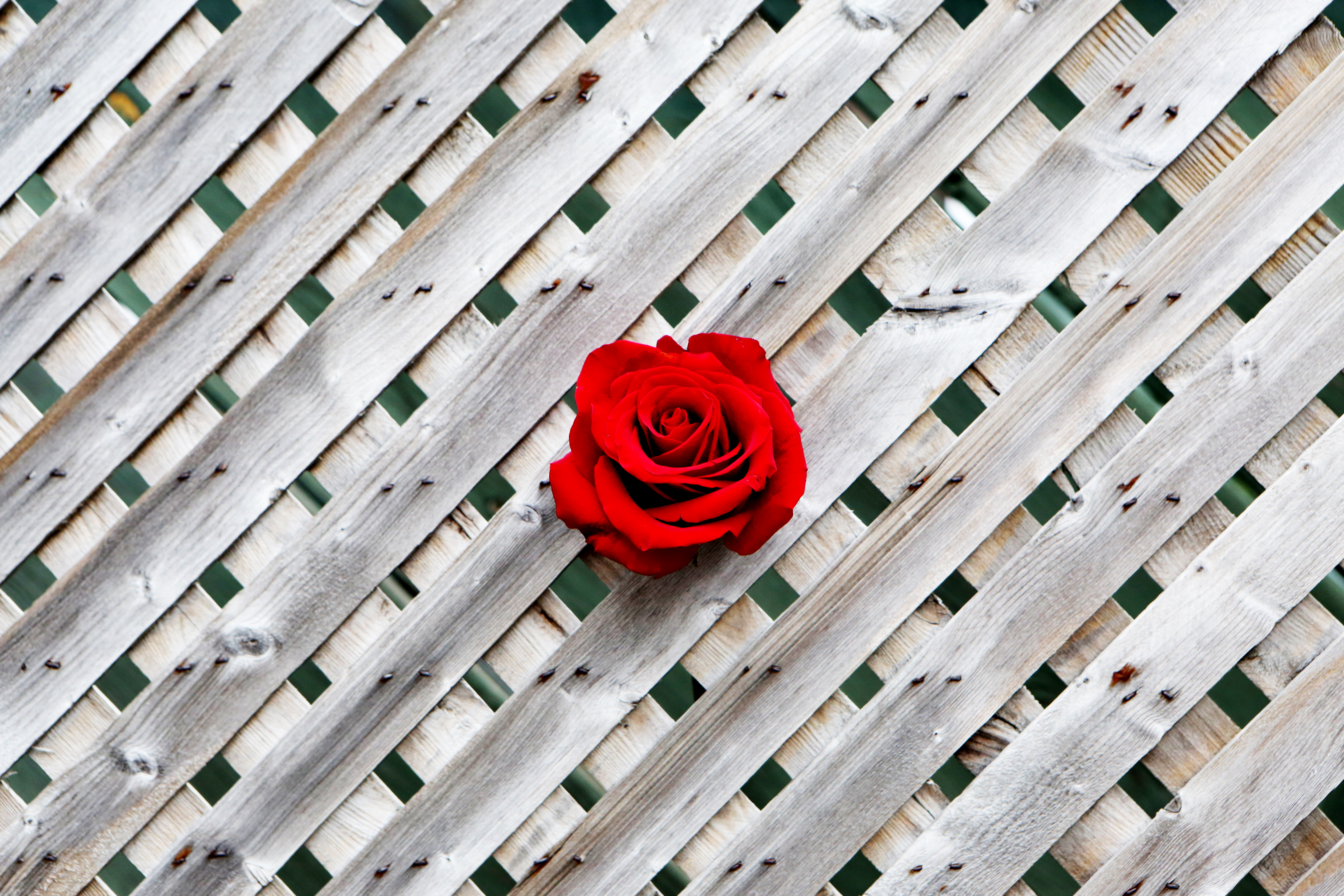119892 Screensavers and Wallpapers Wooden for phone. Download Wood, Wooden, Rose Flower, Rose, Minimalism, Wall, Fence pictures for free
