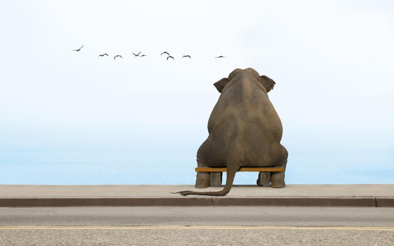 36195 скачать обои Юмор, Животные, Слоны - заставки и картинки бесплатно