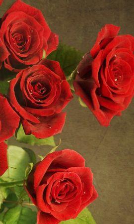 46949 baixar papel de parede Plantas, Flores, Rosas - protetores de tela e imagens gratuitamente