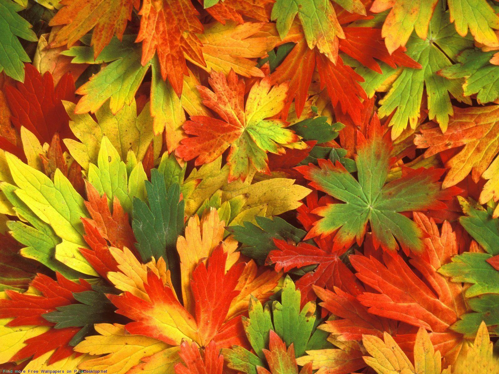 20756 скачать обои Фон, Осень, Листья - заставки и картинки бесплатно