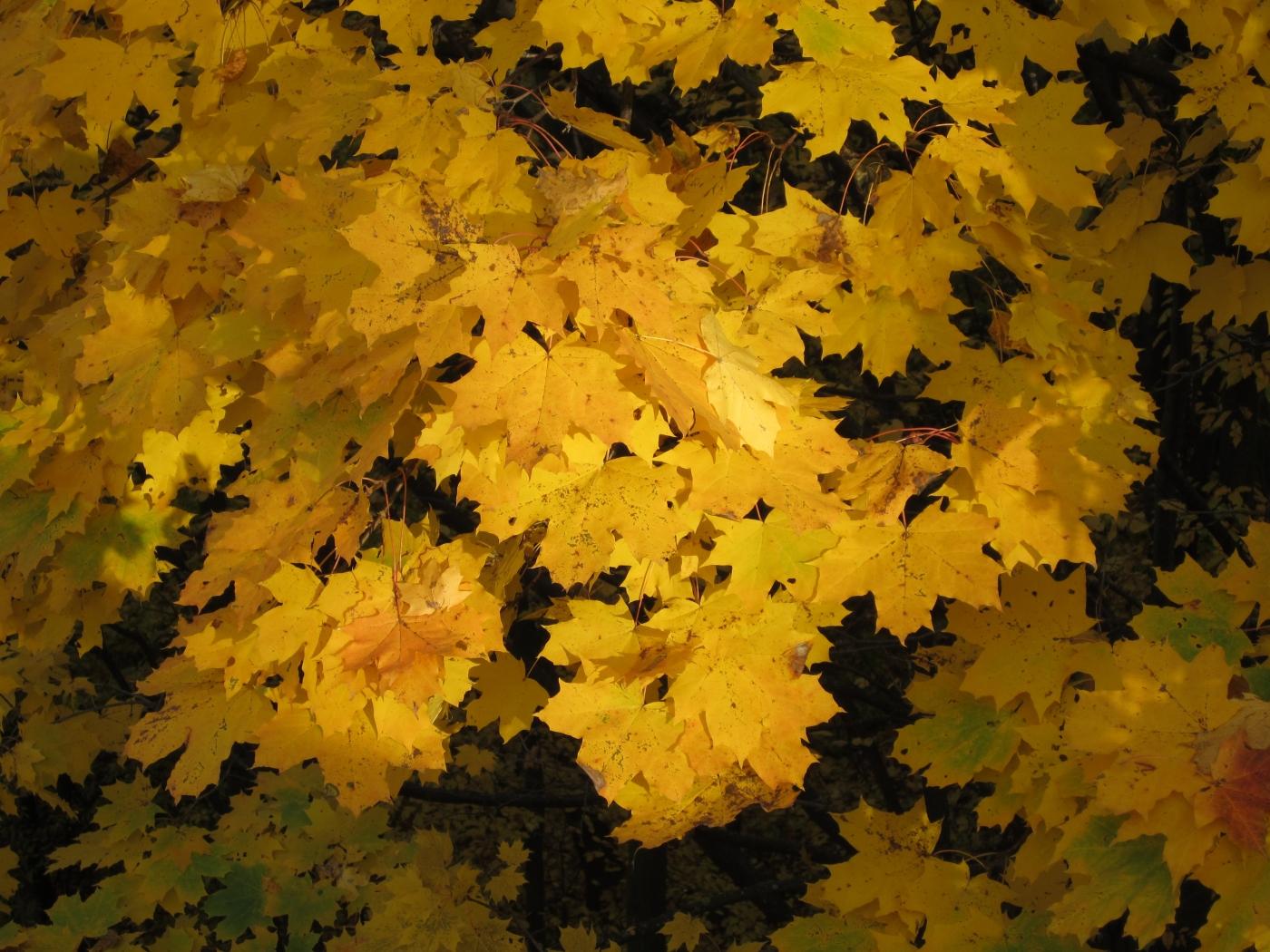 37980 скачать обои Растения, Цветы, Осень - заставки и картинки бесплатно