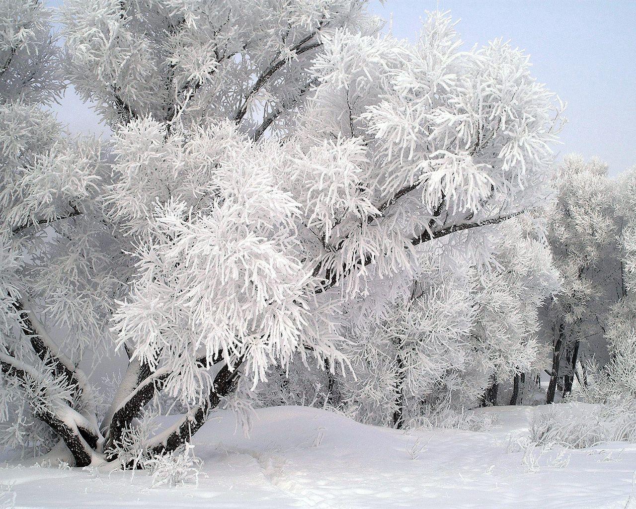104185 скачать обои Зима, Природа, Дерево, Иней, Ветви, Декабрь - заставки и картинки бесплатно
