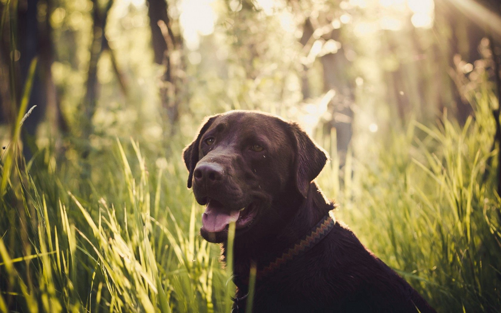 145475 download wallpaper Animals, Dog, Muzzle, Grass, Sight, Opinion screensavers and pictures for free