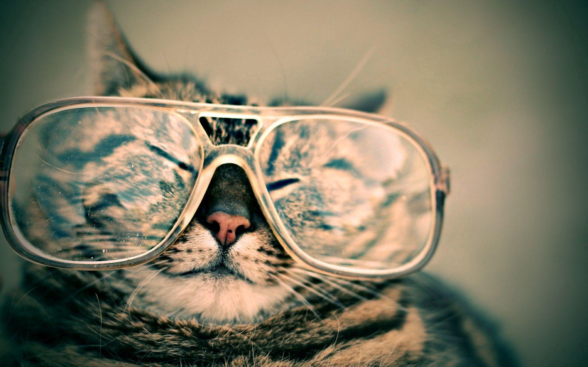 Handy-Wallpaper Tiere, Der Kater, Katze, Schnauze, Gestreift, Brille, Scherz, Witz kostenlos herunterladen.