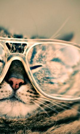 149165 download wallpaper Animals, Cat, Muzzle, Glasses, Spectacles, Joke, Striped screensavers and pictures for free