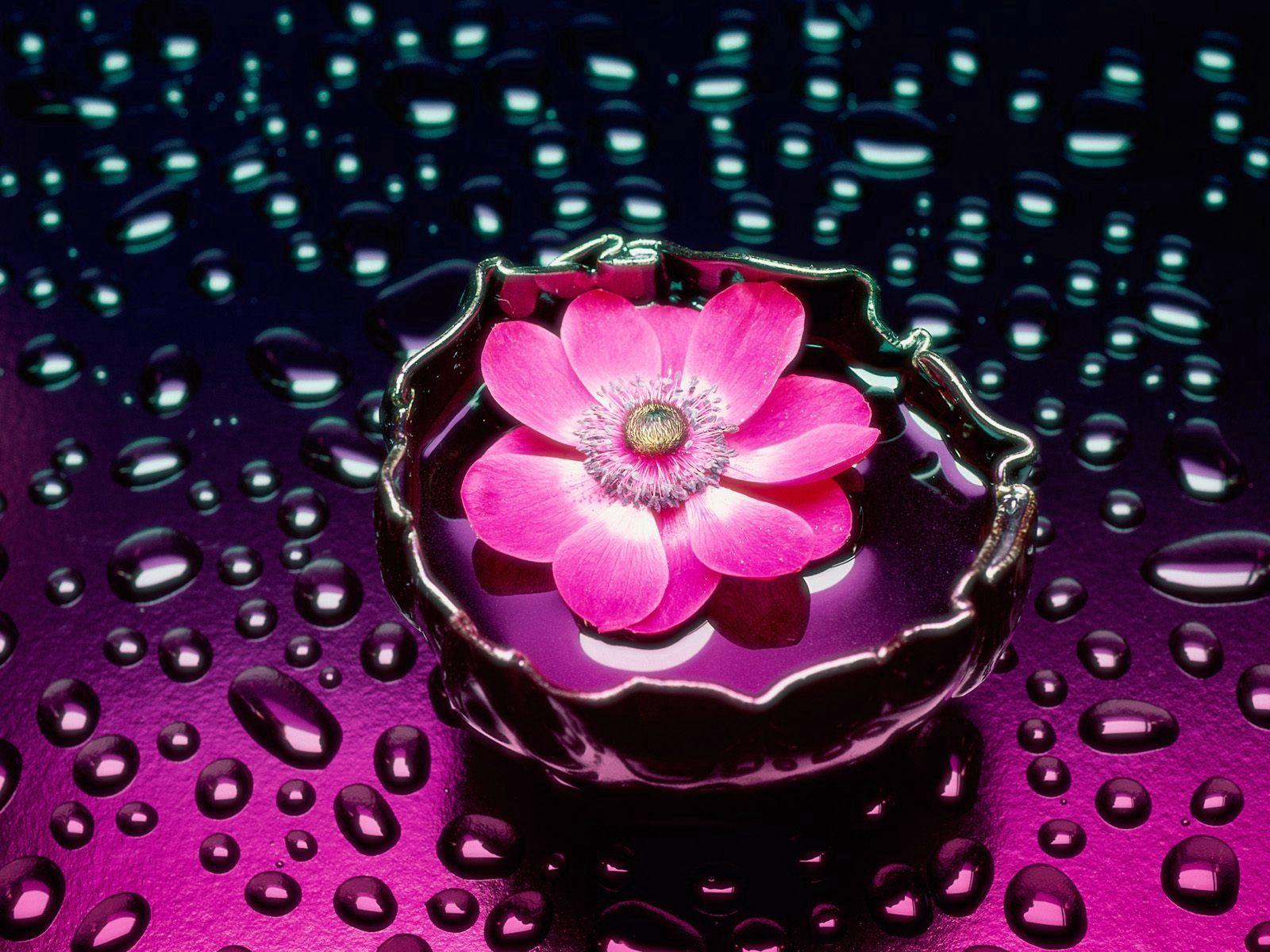 121958 descargar fondo de pantalla Flores, Flor, Drops, Agua, Jarrón, Fondo: protectores de pantalla e imágenes gratis