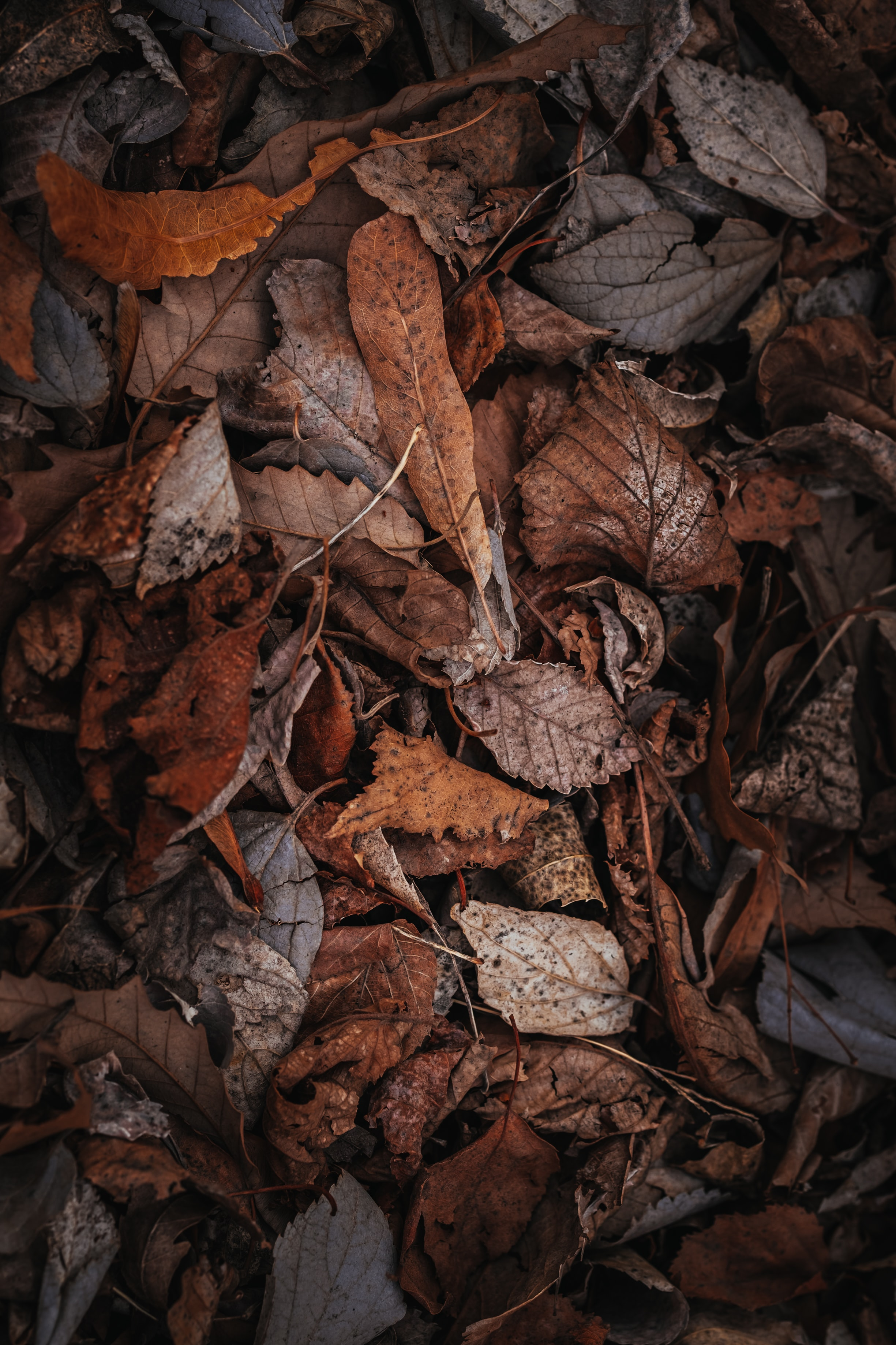 118739 download wallpaper Nature, Foliage, Dry, Autumn screensavers and pictures for free